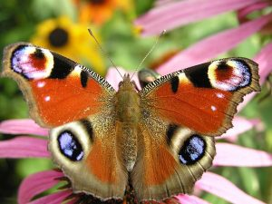 Verwandlung zum Schmetterling