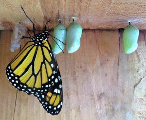 Entwicklung - Schmetterling - Berufliche Neuorientierung